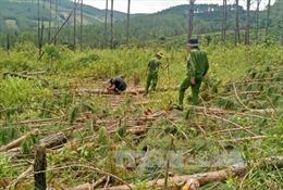 Lâm tặc chém tử vong cán bộ quản lý rừng Lâm Đồng
