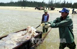 Sự cố môi trường biển tại miền Trung được tích cực giải quyết