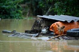 Miền Trung tiếp diễn mưa lớn đến ngày 4/11