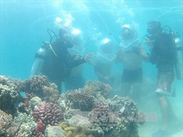 Duy trì hệ sinh thái biển và ven bờ