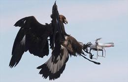 Không quân Pháp 'tuyển' đại bàng để xử lý UAV khủng bố