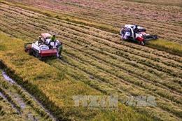 'Festival quốc tế nông nghiệp vùng đồng bằng sông Cửu Long'