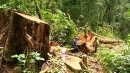 Lãnh đạo chính phủ yêu cầu xử lý vụ 'săn gỗ trừ tà', 'công khai phá rừng phòng hộ'