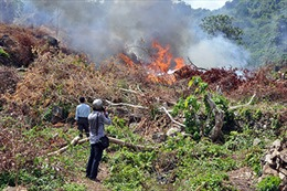 Bắc Giang điều tra, xử lý vụ phá rừng, đốt rừng trái phép quy mô lớn tại xã Lục Sơn