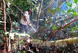 Phó Thủ tướng yêu cầu làm rõ thông tin 'phá rừng để nuôi bò'