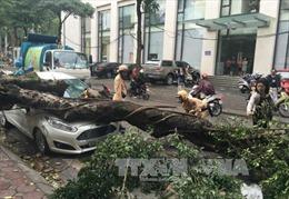 Cảnh báo cây xanh gãy đổ trong dông lốc tại Hà Nội