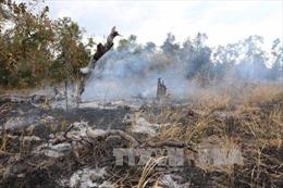 Gia tăng nạn phá rừng, lấn chiếm đất lâm nghiệp trái phép tại Đắk Lắk