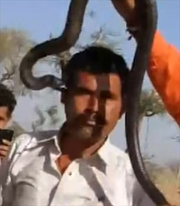 Nhận 'nụ hôn thần chết' từ rắn độc, nam du khách chịu kết cục thảm thương