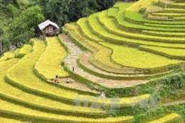 Tạo điểm nhấn quảng bá tiềm năng du lịch Yên Bái