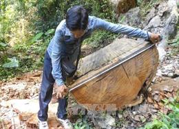 Phát hiện cây gỗ dầu 'khủng' bị chôn vùi ở cửa biển Rạch Gốc, Cà Mau