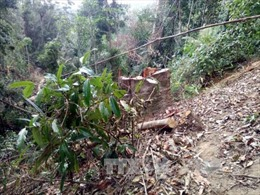 Để mất rừng, nhiều cán bộ lâm nghiệp ở Kon Tum bị kỷ luật
