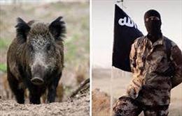 Kỳ lạ chuyện lợn rừng tiêu diệt 3 phiến quân, IS điên tiết trả thù