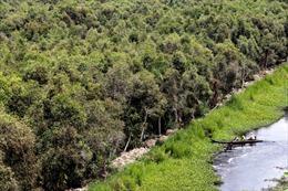Bảo vệ Vườn quốc gia U Minh Hạ, Cà Mau