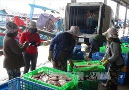 Ngư dân Khánh Hòa được mùa vụ cá Nam