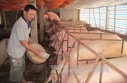 Hà Nam tháo gỡ khó khăn cho các hộ chăn nuôi lợn