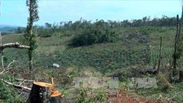 Cao Bằng kiểm điểm trách nhiệm vụ 'chặt nhầm' 4 ha rừng phòng hộ