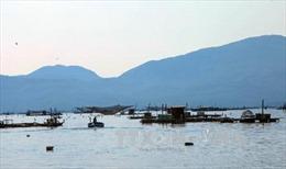 Nhiều loài thủy sản tầng đáy vịnh Xuân Đài chết chưa rõ nguyên nhân
