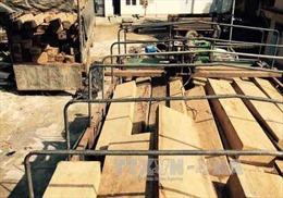 Liều lĩnh trà trộn thêm gỗ quý vào gỗ tang vật để mang ra khỏi rừng