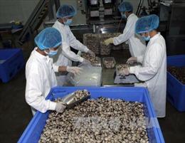 Mở hướng xuất khẩu ngao sạch sang châu Âu