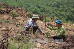 Vĩnh Phúc huy động nguồn lực phòng chống cháy rừng