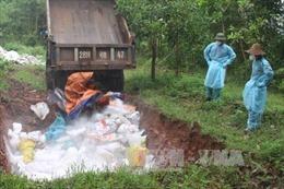 Quảng Ninh: Tiêu hủy 65 con lợn có nhiều dấu hiệu lạ
