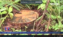 Gia Lai phát hiện nhiều sai phạm tại Ban Quản lý Rừng phòng hộ Bắc Biển Hồ