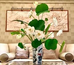 Tuyệt chiêu cắm hoa sen đẹp như mơ của 'soái ca' Hà thành