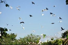 Bảo tồn sân chim lớn nhất đồng bằng sông Cửu Long