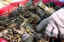 Phú Yên gỡ khó cho ngành thủy sản