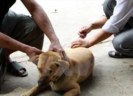 Trên 70% dịch bệnh ở người có nguồn gốc từ động vật