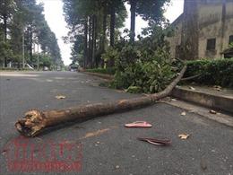 Nữ công nhân nguy kịch vì bị nhánh cây rớt trúng đầu