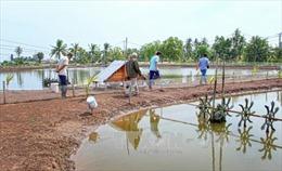 Tiết kiệm điện trong nuôi tôm tại Đồng bằng sông Cửu Long: Mối lo về an toàn điện - Bài 1