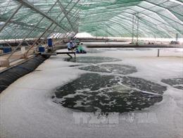 Thách thức từ cung cấp điện trong nuôi tôm tại Đồng bằng sông Cửu Long - Bài 2