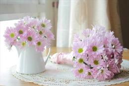 Nồng nàn hoa cúc gọi Thu sang