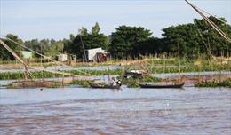 Nông dân vùng lũ mở đồng đón dòng phù sa