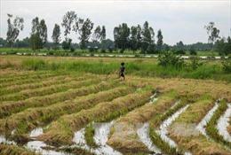 Đồng bằng sông Cửu Long mùa nước nổi - Bài 2: Nông dân mở đồng đón phù sa