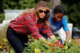 Đệ nhất phu nhân Melania Trump xắn tay làm vườn 'di sản' của bà Obama
