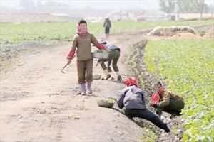 Hé lộ những bí ẩn về đời sống nông thôn Triều Tiên