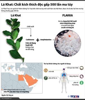 Lá Khat: Chất kích thích độc gấp 500 lần ma túy