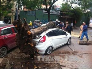 Cây phượng cổ thụ bất ngờ gãy đổ đè bẹp xe ô tô trên đường Lý Thường Kiệt