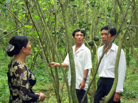 Nông dân người Khmer sản xuất giỏi