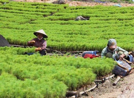 Gia Lai đặt mục tiêu trồng 7.500 ha rừng tập trung trong mùa mưa