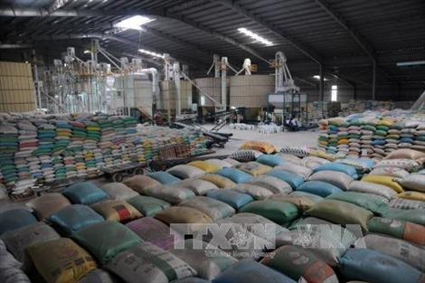 Thủ tướng giao bộ, ngành đẩy mạnh xuất khẩu gạo