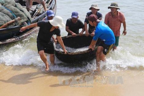 Ngư dân Thừa Thiên - Huế được mùa cá cơm