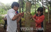 Lai Châu: Thu nhập giảm sút, công nhân cao su bỏ việc hàng loạt