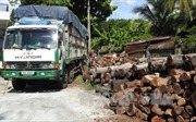 Bắt xe chở gỗ lậu ở Lâm Đồng