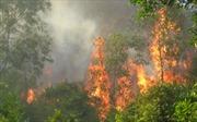 Sét đánh cháy rừng U Minh Hạ
