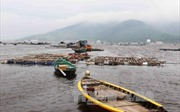 Đà Nẵng gỡ khó cho ngư dân, tiểu thương
