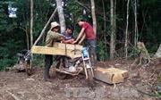 """Quyết liệt xử lý """"cào cào sắt"""" phá rừng Đăk Glei"""