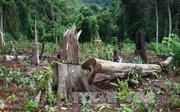 Đình chỉ vụ án phá rừng tại Lâm trường Măng La